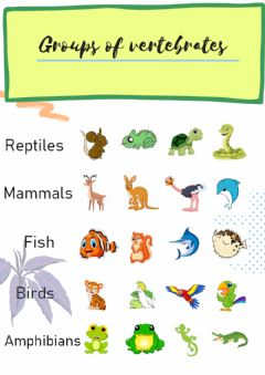 Interactive worksheet Groups of vertebrates