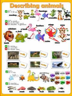 Ficha interactiva Describing animals