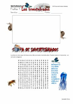 Interactive worksheet Animales invertebrados 1