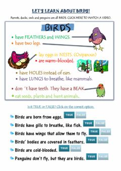 Interactive worksheet Let-s learn about birds!