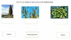 Interactive worksheet PIANTE  E ANIMALI DEL FIUME