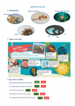 Interactive worksheet Sea animals