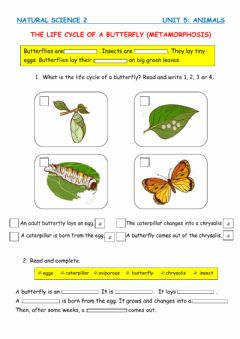 Interactive worksheet The life cycle of a butterfly