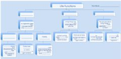 Interactive worksheet Unit 3 Life Functions Complete the Scheme