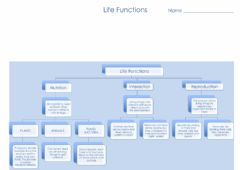 Ficha interactiva Unit 3 Life Functions Scheme
