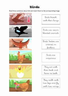 Interactive worksheet Birds
