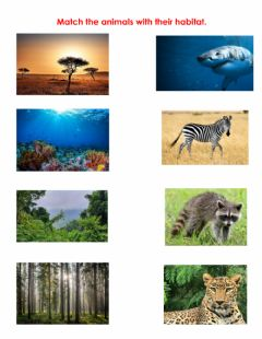 Ficha interactiva Animals and their habitat.