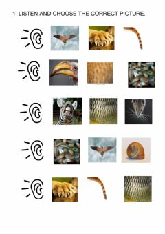 Interactive worksheet Animals body parts-listening and reading