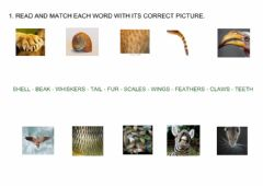 Interactive worksheet Animals body parts-Reading and writing