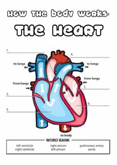 Interactive worksheet Y5 the heart