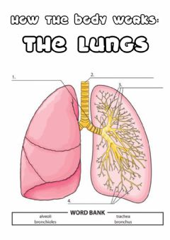 Interactive worksheet Y5 the lungs