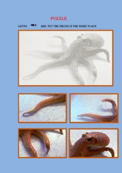 Interactive worksheet Octopus
