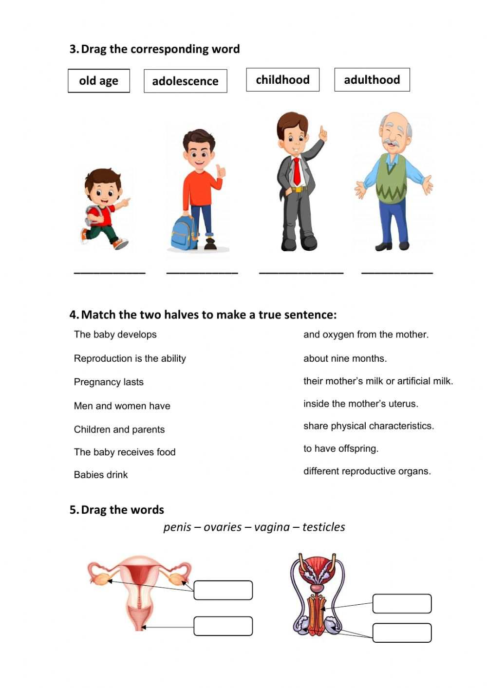 Human body systems and senses test worksheet