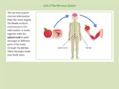 Ficha interactiva Unit 2 Nervous System Information
