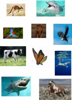 Interactive worksheet Air, land and water animals