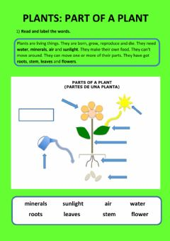 Ficha interactiva Plants and flowers parts