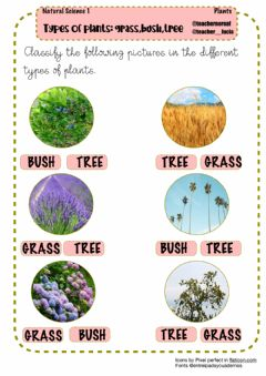 Interactive worksheet Types of plants