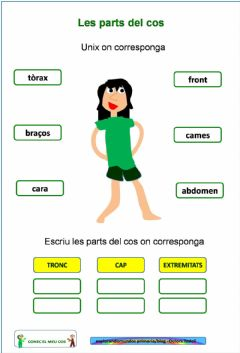 Interactive worksheet Les parts del cos