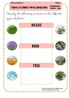 Interactive worksheet Types of plants: grass,bush,tree