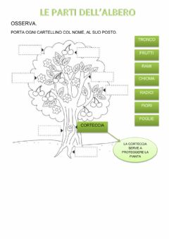 Interactive worksheet Parti dell'albero