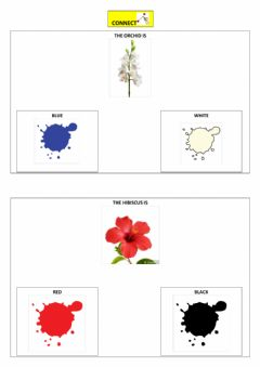 Interactive worksheet The colours of flowers