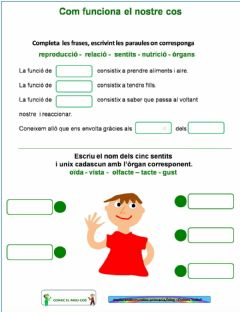 Interactive worksheet Com funciona el nostre cos