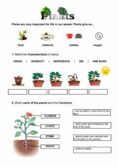 Ficha interactiva Plants review