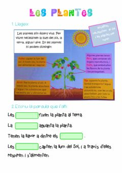Interactive worksheet Les plantes