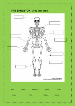 Interactive worksheet The locomotor system