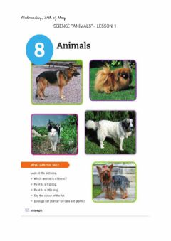 Interactive worksheet Science: animals. Lesson 1.