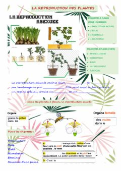 Ficha interactiva La reproduction des plantes