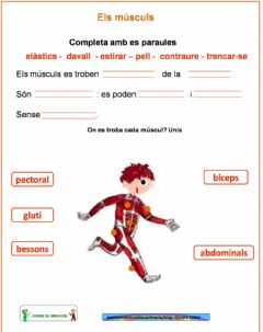 Interactive worksheet Els músculs