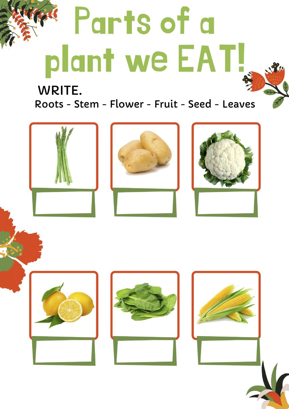 Parts of a plant we eat   Interactive worksheet