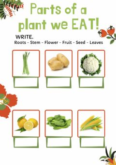Interactive worksheet Parts of a plant we eat