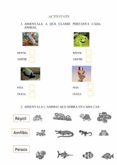 Interactive worksheet El animals ovípars