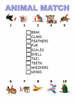 Interactive worksheet Match animal body parts  tiger macmillan