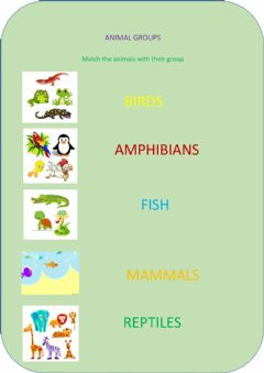Ficha interactiva Animal groups matching