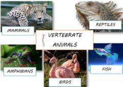 Interactive worksheet Vertebrate animals poster