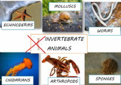 Interactive worksheet Invertebrate animals