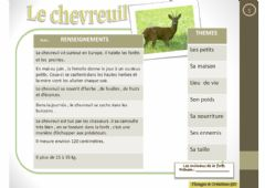 Interactive worksheet Lecture - Le chevreuil