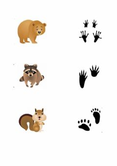 Interactive worksheet Emparellar petjades animals