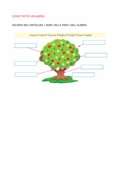 Interactive worksheet Albero