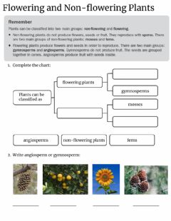 Interactive worksheet Flowering and Non-flowering plants