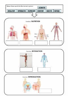 Ficha interactiva Body System and functions