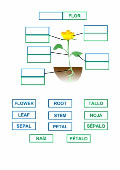 Interactive worksheet Parts of a flower