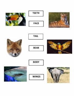 Ficha interactiva Animals: Parts of the body