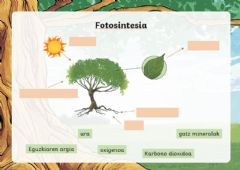 Interactive worksheet Fotosintesia