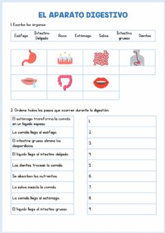 Interactive worksheet Aparato digestivo