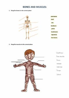 Interactive worksheet Bones and muscles