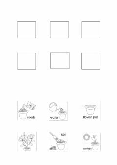 Interactive worksheet Plant growth